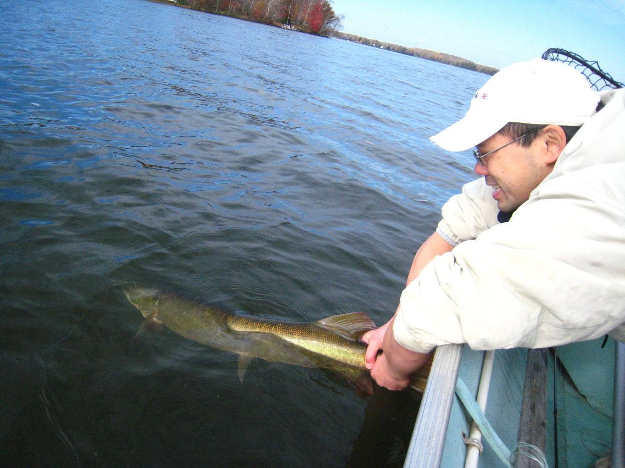 50″ Muskie (Almost)