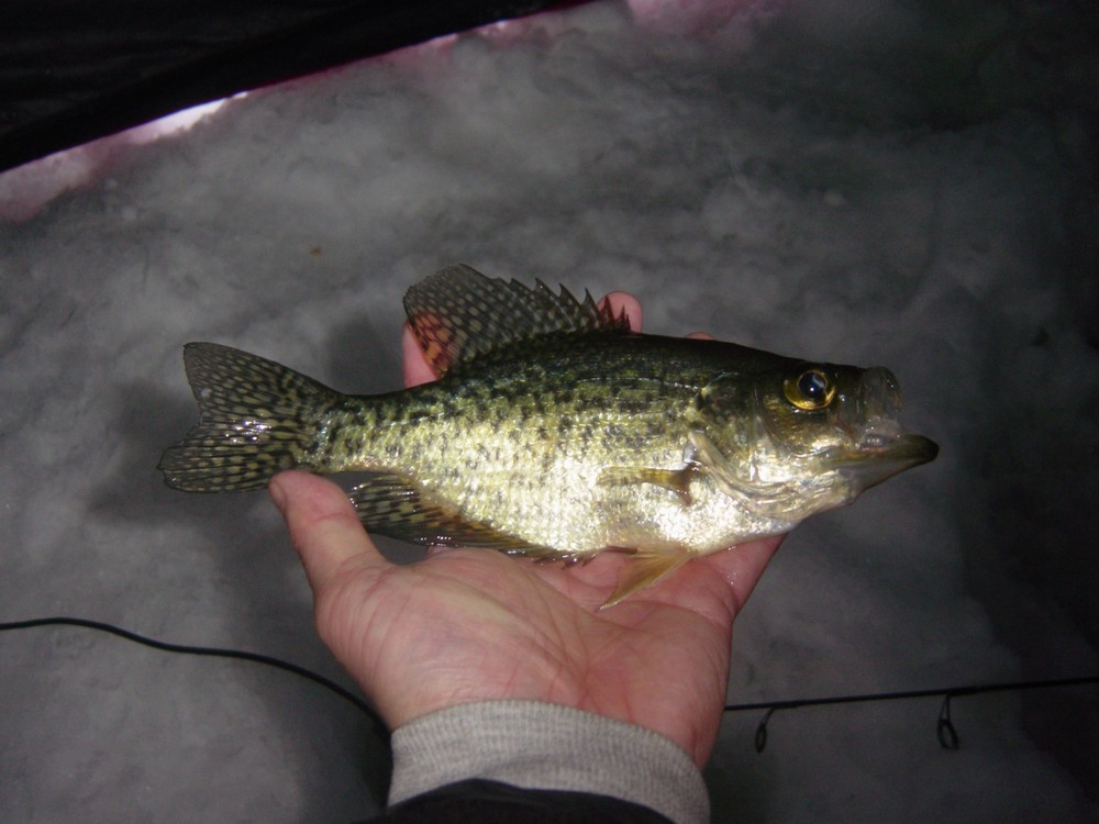 Ice Fishing 2010-2011 In Review