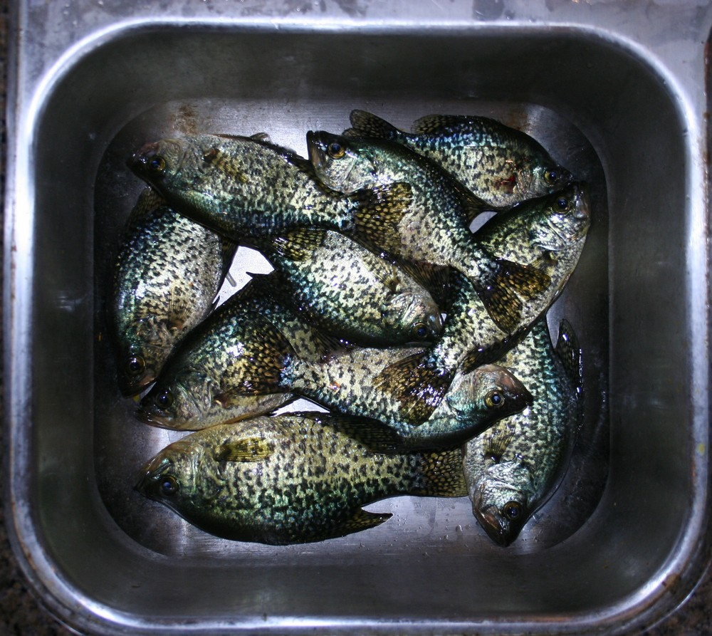 Spring Crappie and a Few Bonuses